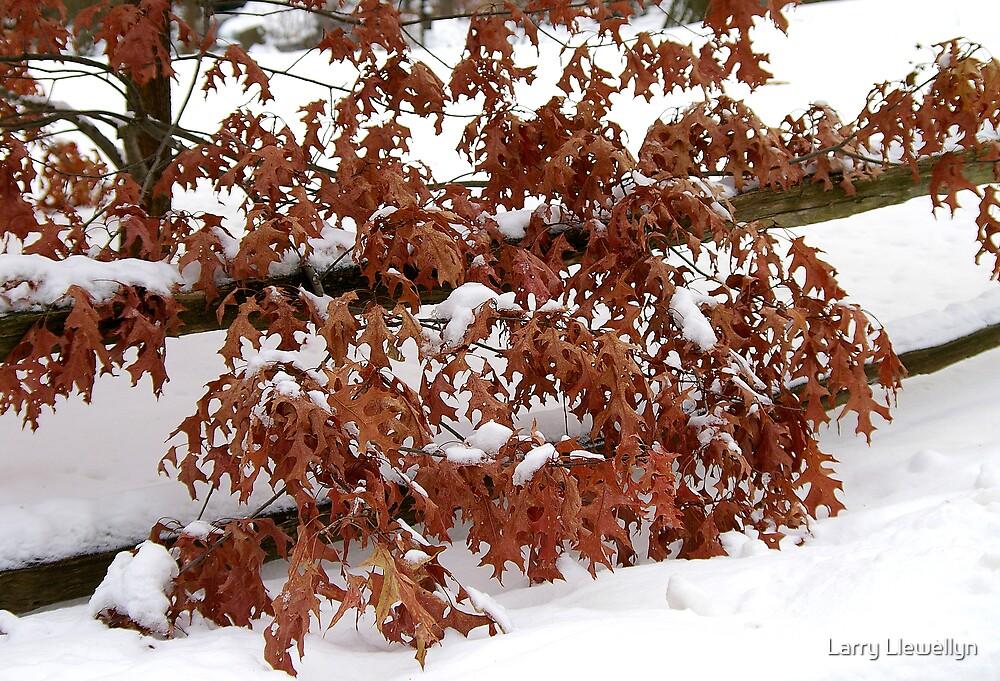 Fall in January.... by Larry Llewellyn