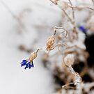 Winter Insomnia by Kory Trapane