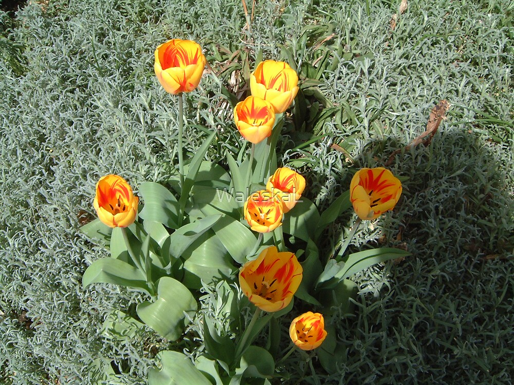 Yellow Tulips by WaleskaL
