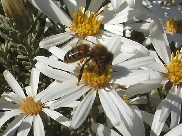 Busy Bee by Mary  Galea