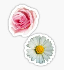 Rose & daisy Sticker