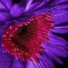 Heart Of The Flower by AlexMac