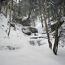 Fresh Snow Falls On Delaware Falls by Gene Walls