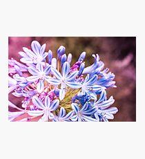 Blue Tiny Flowers Photographic Print