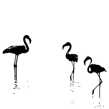 We Are The Three Flamingoes Silhouette In Black by taiche