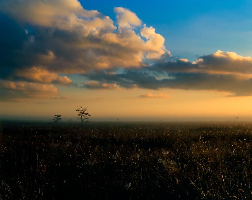 Glistening Sawgrass by Denis Wagovich