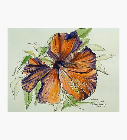Red hibiscus Hawaii: pen and wash. Photographic Print