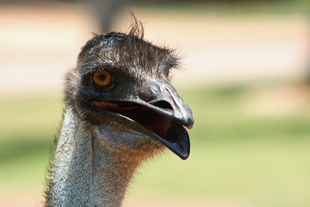 Emu, Exmouth by Leigh Penfold