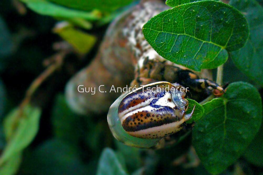Caterpillar 3 by Guy C. André Tschiderer