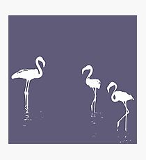 We Are The Three Flamingoes Silhouette In White Photographic Print