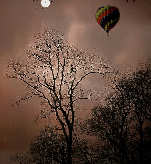 Fly to the Moon by Judi Taylor