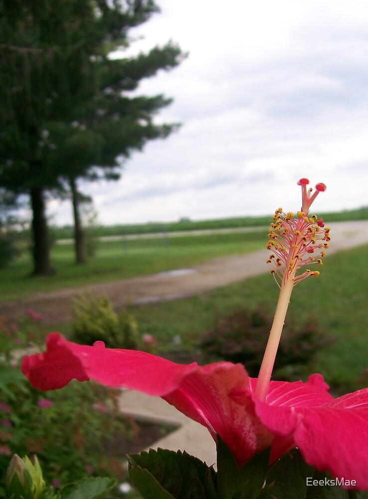 Hibiscus by EeeksMae