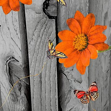 Orange Daisies on Wood by posyrosie