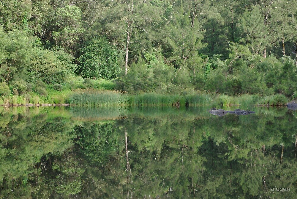 Pond reflections by halogen
