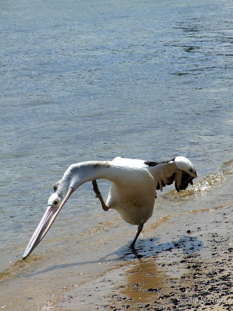 Pelican Walk by Sandra McNabb