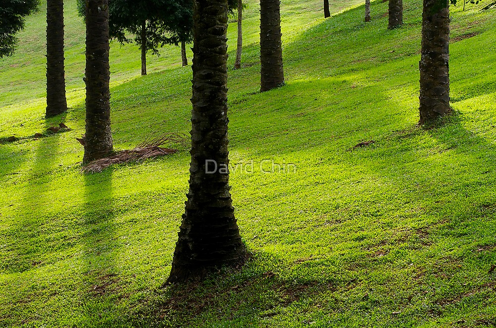 Oil Palm Tree Trunks by David Chin
