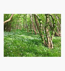 Danish Island Forest Photographic Print