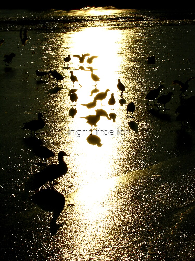 silouette and shadow by ingrid froelich