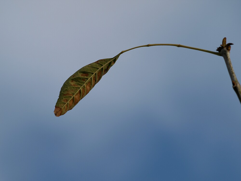 The last leaf on the tree by MichaelBr