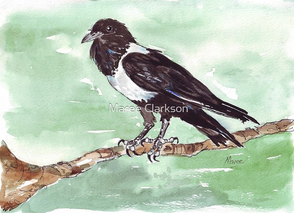 Domino, die Trauerkrähe (Corvus albus) von Maree Clarkson