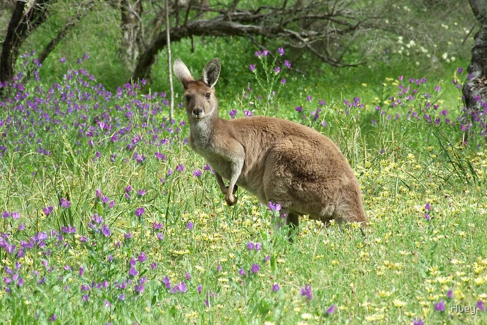 Kangaroo Alert by Huey