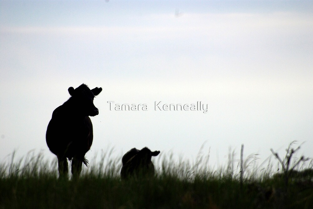 Late Afternoon by Tamara  Kenneally
