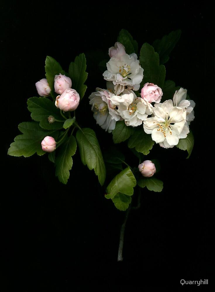 Spring memory by Quarryhill