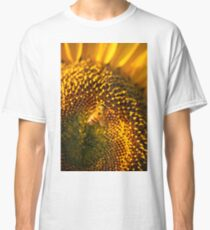 Sunflowers in a field in the afternoon. Classic T-Shirt