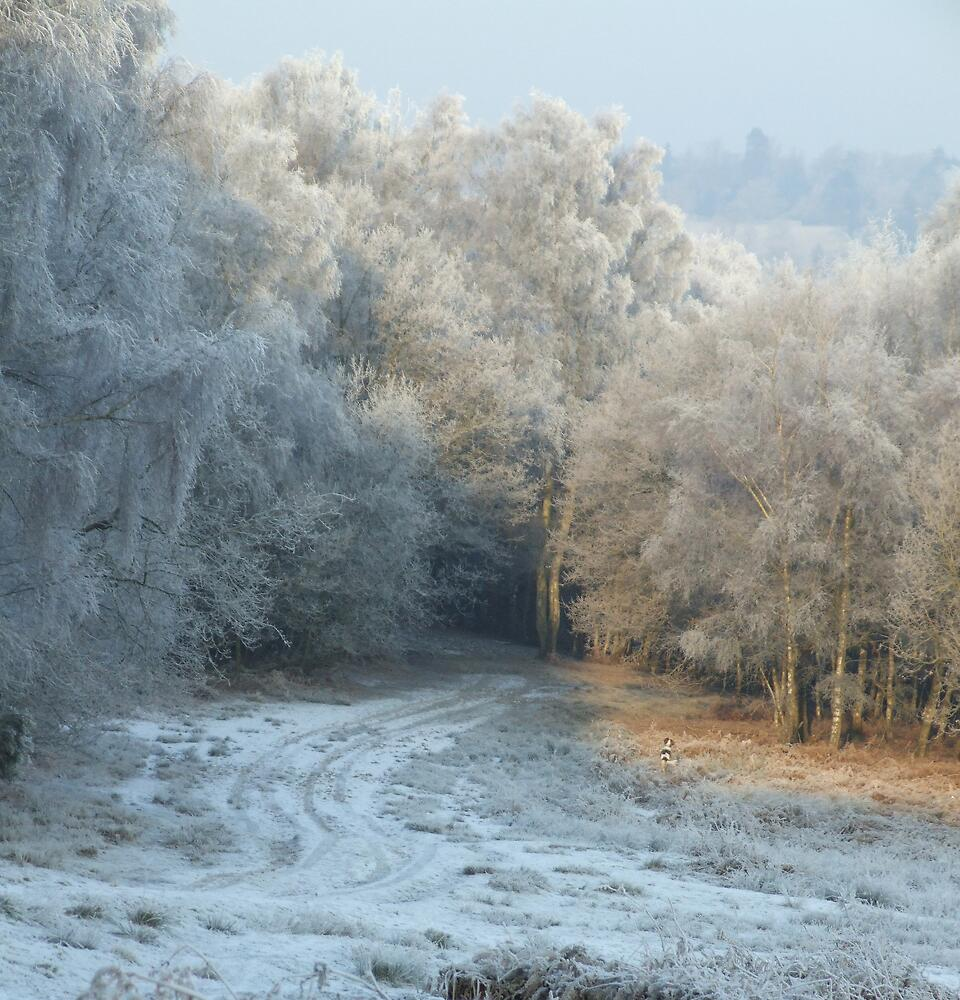 Frost On The Forest by Uberschnapp