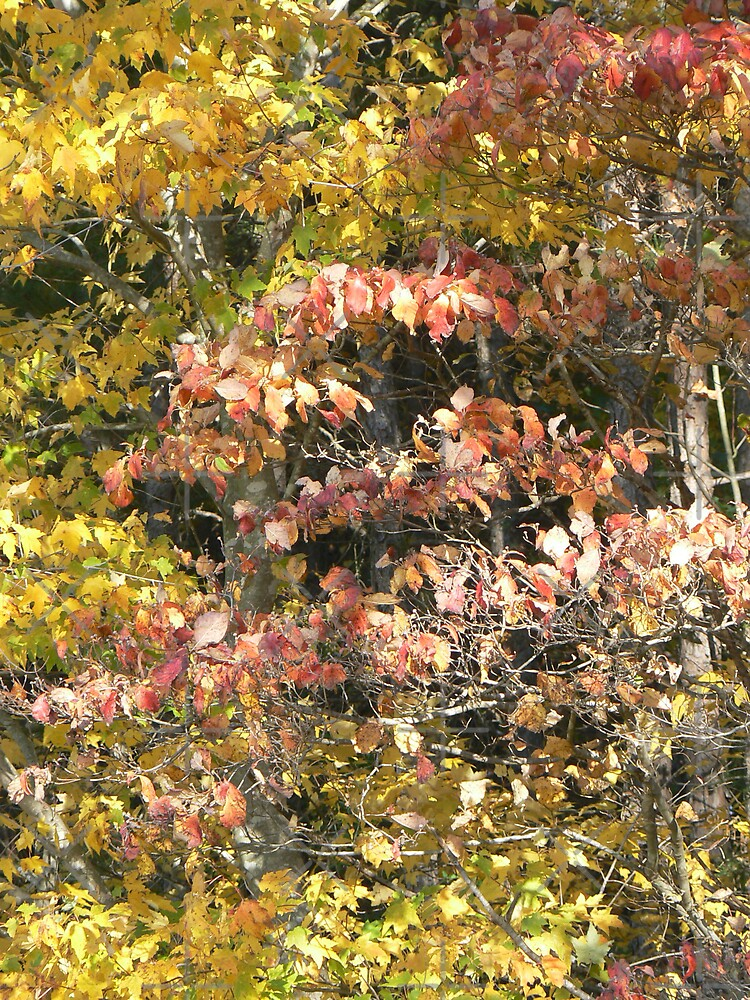 Dogwood & Maple by Sheila Simpson