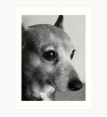 Jack Russell Terrier Portrait Art Print