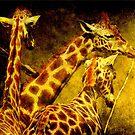 Giraffes galore by Alan Mattison