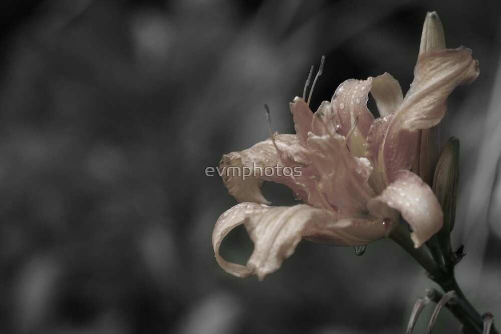 Faded. by evmphotos