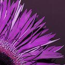 frilly flower by Angel Warda