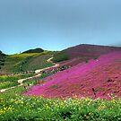 Path Along a Purple Field by Wayne King