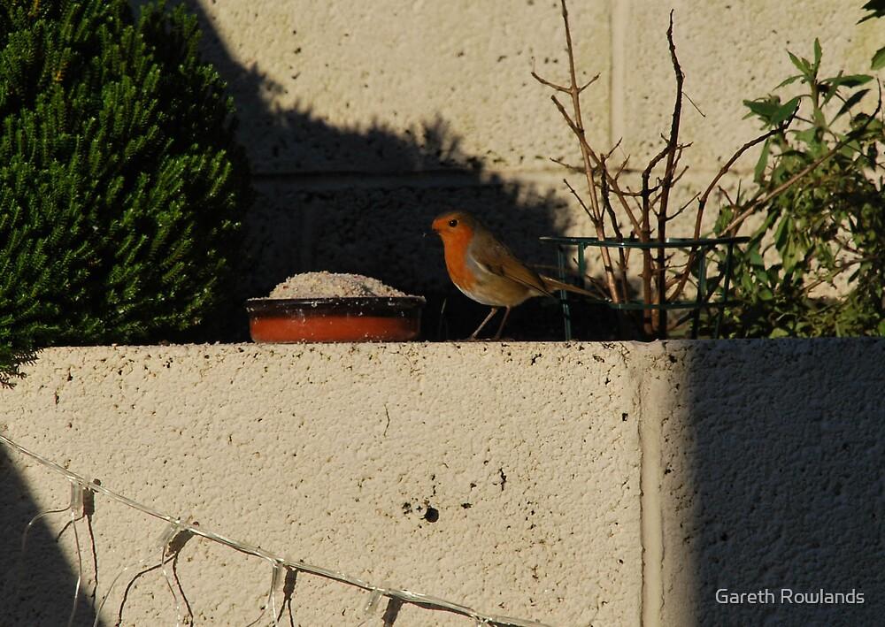 Christmas Day Robin by Gareth Rowlands