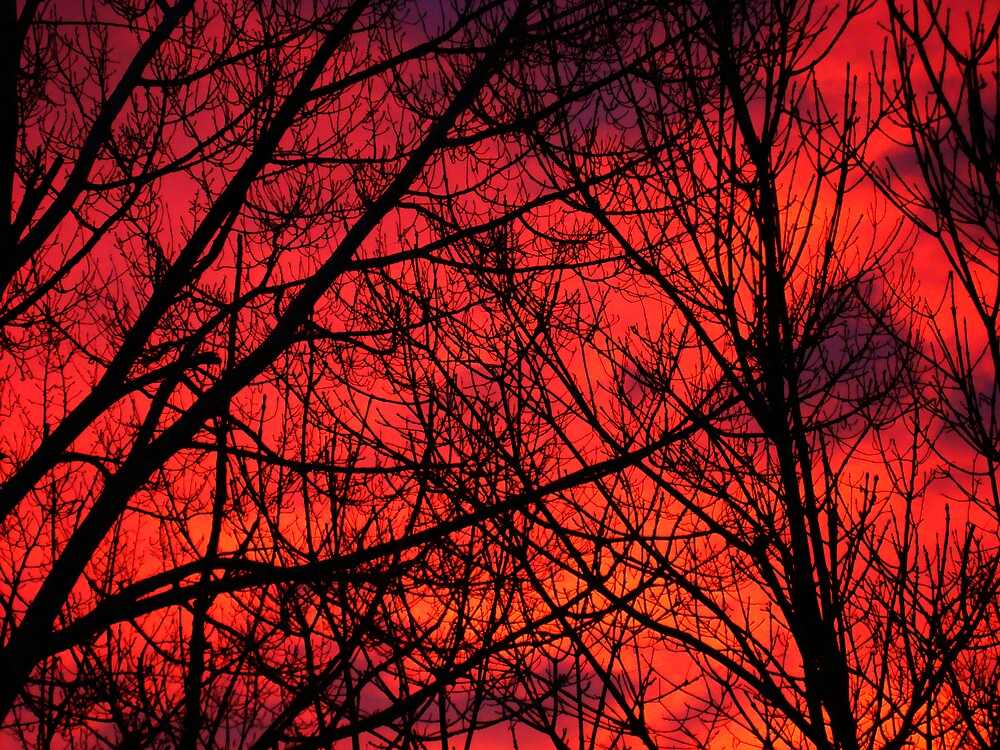 Fire In the Sky by Virginia Maguire