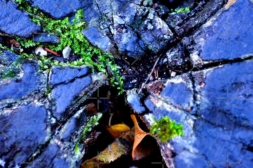 TREE by nguyen