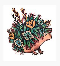Cute Hedgehog With Flowers Photographic Print