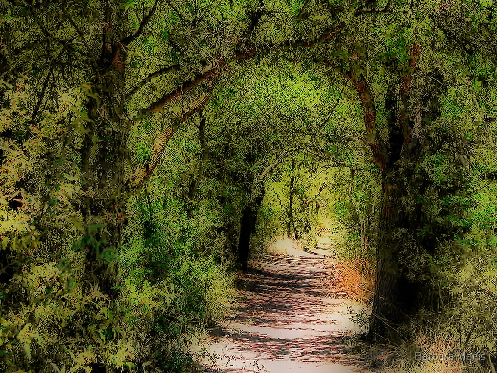 Through the Woods by Barbara Manis