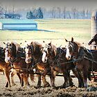 Das Heu mit einem Sechs-Pferde-Team zusammenstellen von Polly Peacock
