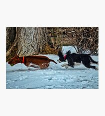 A Winter Playtime Chase Photographic Print