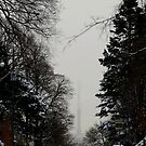 View from Forest Hill Toronto Ontario Canada.. by Larry Llewellyn