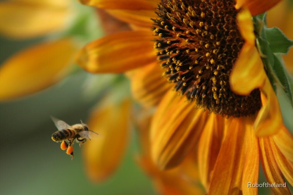 Bunflower by Roboftheland