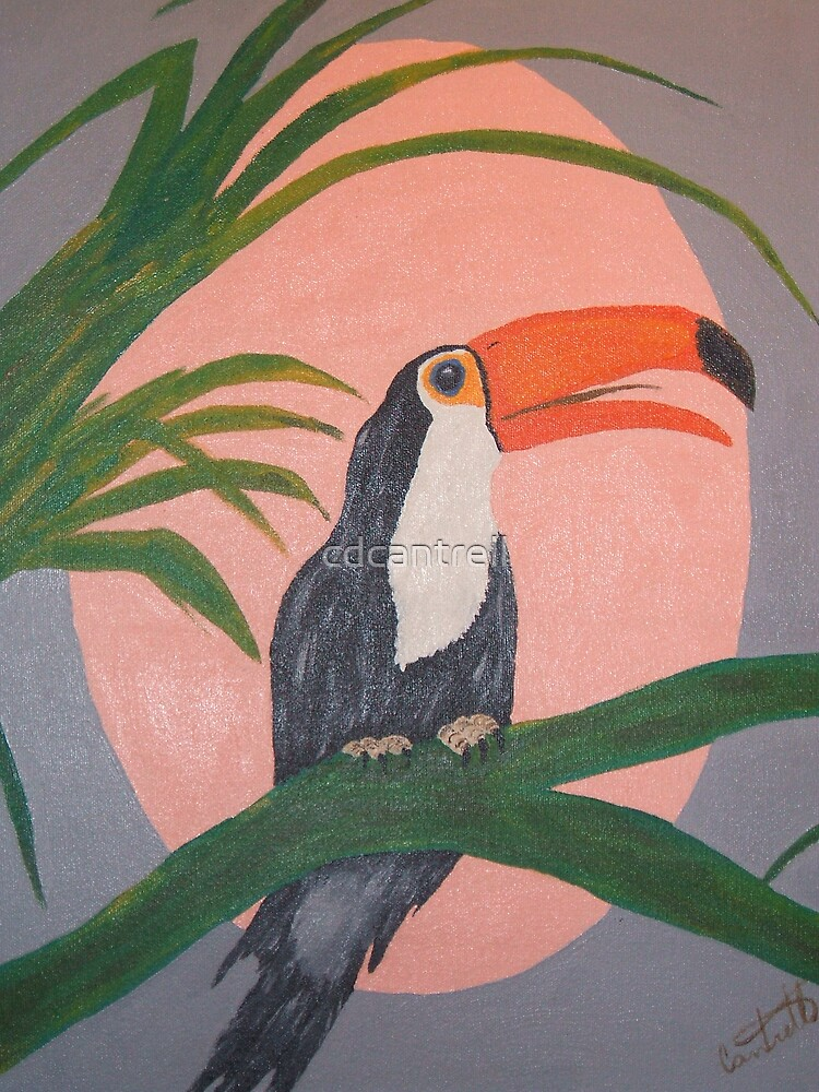 Toucan by cdcantrell