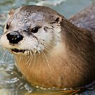 River Otter by Bill Miller