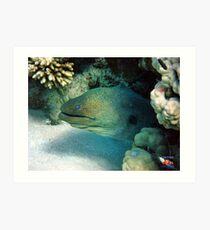 Moray Eel Sharm Egypt Art Print