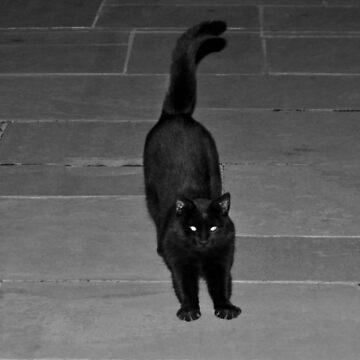 Spunky Black Cat by Cynthia48