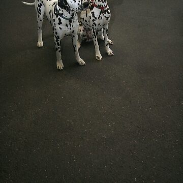 Carriage dogs by skukucka