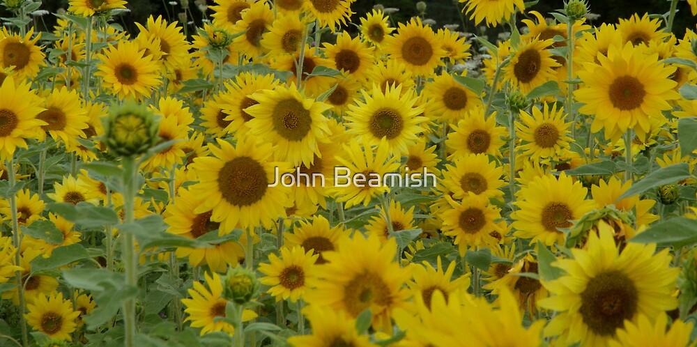 Sea of Sunshine by John Beamish